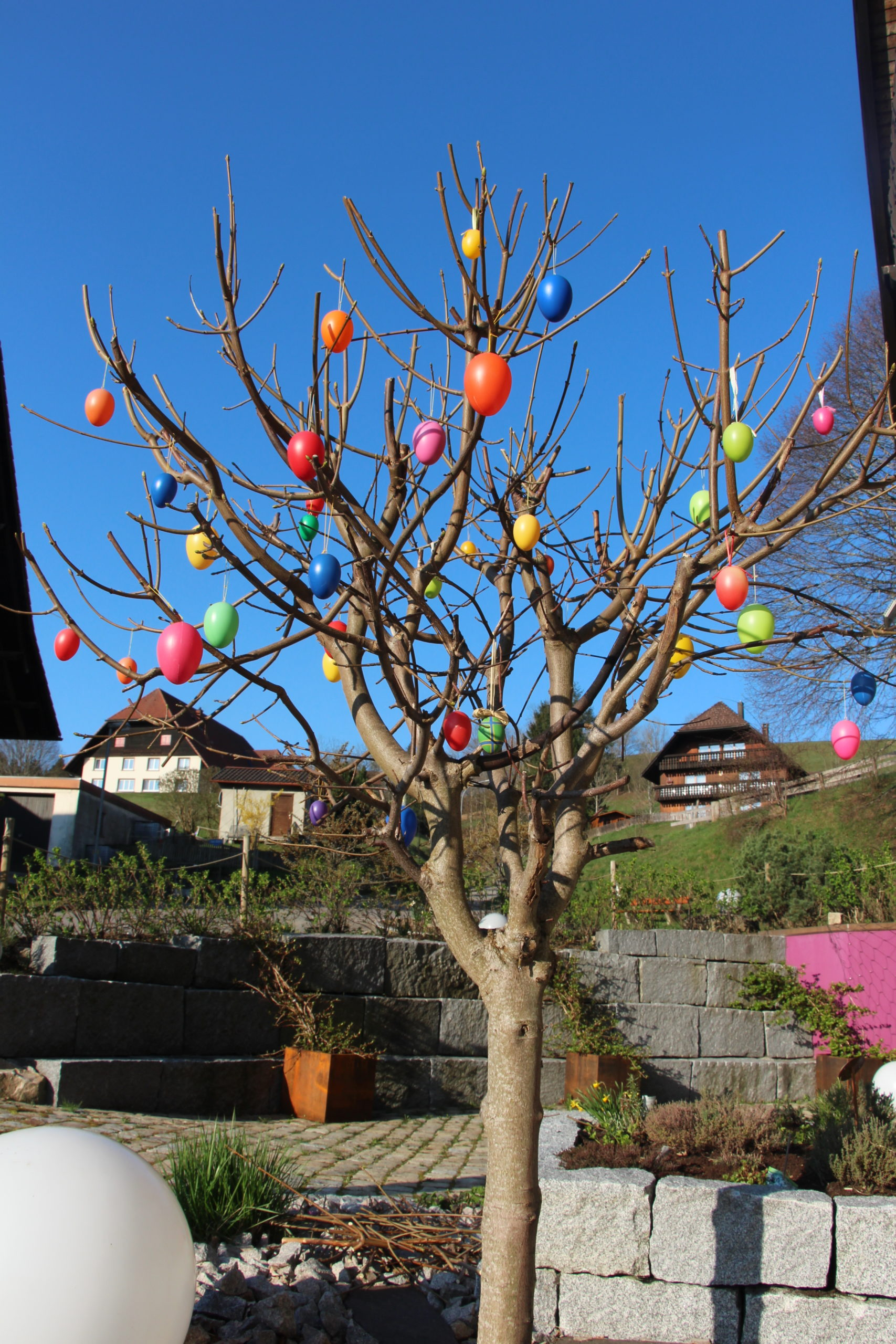 Frühling in  Gersbach